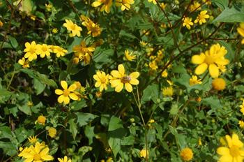 flowers in yucatan
